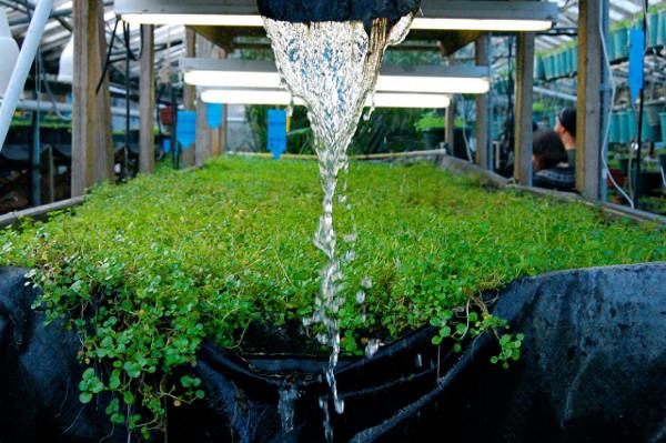 Аквапоника как новая система развития сельского хозяйства