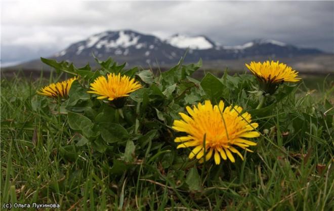 Любителям самого дорогого отдыха добро пожаловать в Исландию