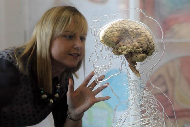 Немецкой ученый нашел в мозге зону породившая  Сталина и Гитлера