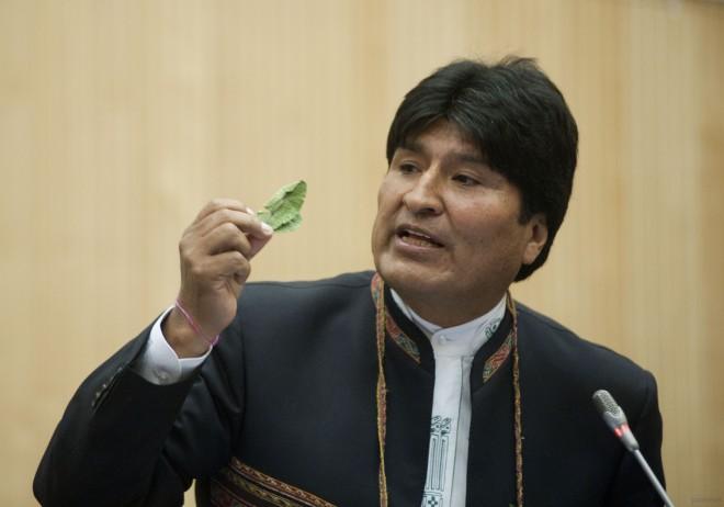 Президент Боливии разрешил своим гражданам жевать листья коки