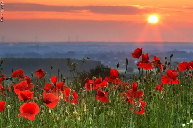 Синоптики: Лето в Украине придет за две недели и будет долгим и жарким.