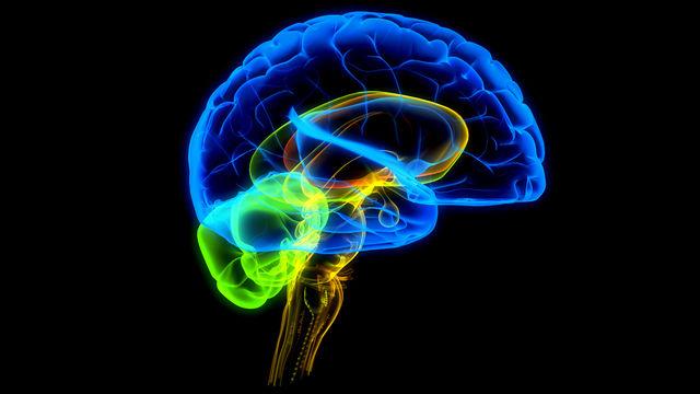 Мозг человека в старосте ржавеет, а у обиженного вырабатывает наркотики.