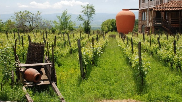 Секреты приготовления настоящего грузинского вина.